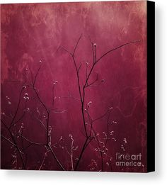Daring Pink Canvas Print by Priska Wettstein. All canvas prints are professionally printed, assembled, and shipped within 3 - 4 business days and delivered ready-to-hang on your wall. Choose from multiple print sizes, border colors, and canvas materials.