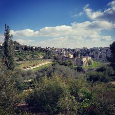 Authentic Jerusalem Tours / Photo by: Yana Milinevsky / 2021-03-21 08:37:57 Cedar Trees, Holy Cross, 11th Century, Group Tours, Jerusalem, Grand Canyon, Things To Do, Places To Visit, City