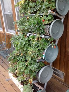 """Build a vertical wall of strawberries using a Balcony Budeze™ Vertical Growing System that you can build yourself for very little money out of easily obtainable """"off-the-shelf"""" parts. Learn how: www.balconybudeze.com"""