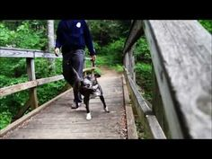 From Homelessness to Happiness : A Shelter Dog Finds Love...meet Stella :-) provides links to her story and article that'll help you think clearly through the hysteria and sensationalism that surrounds pit bulls...