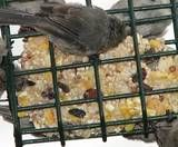 Ingredients to Add to Suet to attract different bird species.    Examples:    --Sunflower Seeds: All birds    --Fruit: Woodpeckers, bluebirds, wrens, warblers, orioles  --Scraps: Jays, nuthatches, wrens, bluebirds, kinglets, starlings  --Birdseed: Nuthatches, cardinals, grosbeaks, sparrows, starlings  --Grain: Sparrows, doves  --Nuts: Jays, woodpeckers, titmice, chickadees, warblers