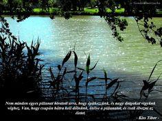 """Képtalálat a következőre: """"gondolatmorzsák"""" Life Quotes, Quotes About Life, Quote Life, Living Quotes, Quotes On Life, Life Lesson Quotes"""