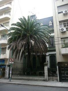 Curiosidades de Buenos Aires: La casa de la palmera