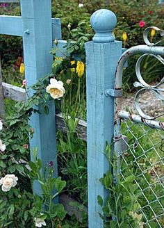 Turquoise fence with yellow roses, lovely...add that old swirly garden gate, perfect!