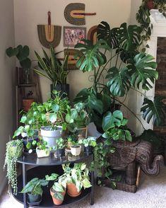 Watering and Fertilizing your Indoor Garden Plants Indoor Plant Pots, Room With Plants, Plants Are Friends, Plant Decor, Houseplants, Garden Plants, Planting Flowers, Greenery, Home And Garden