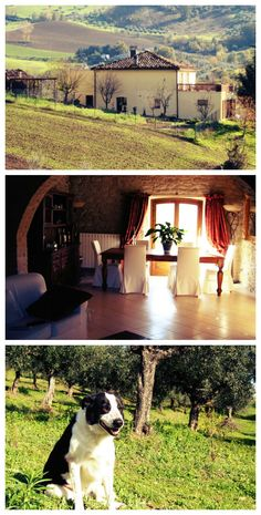 Stay in #Italy in this luxury home from Oct. 2 - Feb. 2, 2016 for FREE! Here is how: http://www.travellingweasels.com/2015/04/house-sitting-opportunities.html #luxurytravel #housesitting #budgettravel