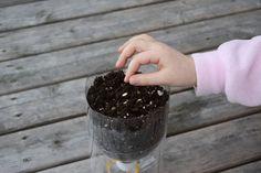How To: Self-Watering Seed Starter Pots   Skruben   Seattle Sundries