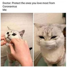 awesome memes you are / awesome memes - awesome memes hilarious - awesome memes you are - awesome memes funny Funny Animal Jokes, Funny Animal Pictures, Cute Funny Animals, Stupid Funny Memes, Funny Relatable Memes, Animal Memes, Cute Baby Animals, Funny Cute, Cute Cats