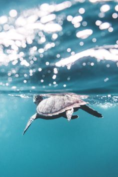 lifeb-u-oy | wavemotions: Swimming with a Turtle