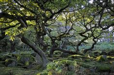 (In Explore) Old Gnarled Trees by JRT ©, via Flickr
