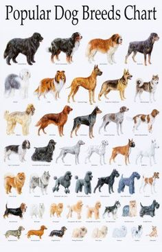 Popular Dog Breeds Chart Poster Printed on a professional high quality paper. The item will be dispatched in days after your payment. The delivery takes around weeks Dog Breed Names, Cute Dogs Breeds, Best Dog Breeds, Best Dogs, Dog Breeds List Of, Small Dog Breeds, Puppy Names, Small Dogs, Dog Breeds With Names
