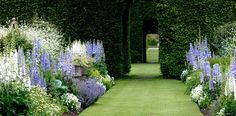 Perfect lawn, busy cottage borders ❤