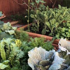 Fabulous backyard garden using raised beds. Raised Garden Beds, Raised Beds, Vegetable Garden Planning, Growing Vegetables, Backyard, Layout, Gardening, Patio, Page Layout