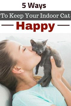This Is How To Keep Your Indoor Cat Happy, Healthy and Entertained Here are 5 tips to give your indoor cat the best life.