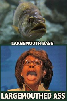 Actually I'd say this CATFISH is a wallhanger.