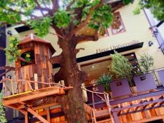 Tree house cafe