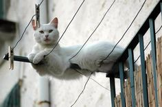 i am just constantly amazed at the most unbelievable places one can find a cat resting!! My firefighter friend advises tho, one never finds any of them stranded high up any where or high up in a tree....
