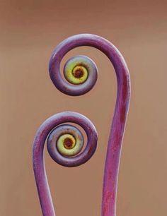 Construction d'une spirale d'aromatiques