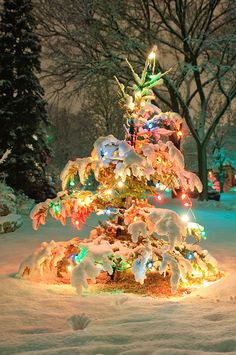 I love this little snow covered tree with the cheery lights!