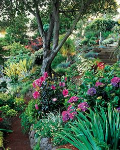 Backyard Planted with hydrangeas, dahlias, and irises, hillside garden.