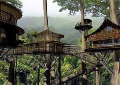 Finca Bellavista - A real life treehouse village in Costa Rica