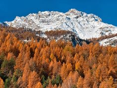 Autumn colors in Massif des Ecrins, in the French Alps. Mike Long, Your Take Alpine Flowers, National Weather, French Alps, Fall Photos, You Take, Beautiful Scenery, Mother Nature, Mountains, Landscape