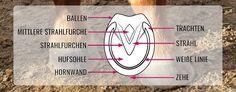 Der Huf! Was du alles wissen musst – PLUS: Die wichtigsten Tipps für gesunde Hufe