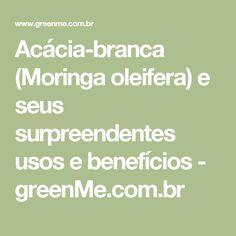 Acácia-branca (Moringa oleifera) e seus surpreendentes usos e benefícios - greenMe.com.br