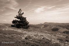 NBD08 - Sommet de la Montagne de Lure - Alpes de Haute Provence 04
