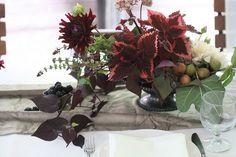 coleus, potato vine, figs, some other stuff