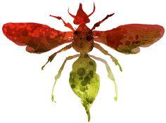 acuarela insectos - Buscar con Google