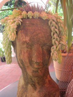 Terracotta head planter with succulents