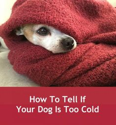 How To Tell If Your Dog Is Too Cold...see more at PetsLady.com -The FUN site for Animal Lovers