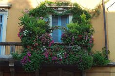 Вертикальное озеленение балкона: 20 идей и 10 советов