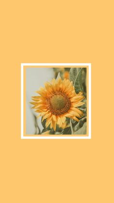 Cute and FREE wallpapers for your smartphone. Flower Phone Wallpaper, Bear Wallpaper, Mood Wallpaper, Cute Wallpaper For Phone, Cute Wallpaper Backgrounds, Tumblr Wallpaper, Colorful Wallpaper, Cute Wallpapers, Cartoon Wallpaper