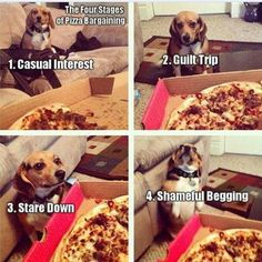 A Dog's Four Stages Of Bargaining cute animals dogs adorable dog puppy animal pets humor funny animals funny pets funny dogs Funny Animal Memes, Dog Memes, Cute Funny Animals, Funny Animal Pictures, Funny Cute, The Funny, Funny Dogs, Funny Memes, Hilarious Pictures