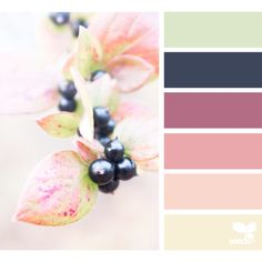 Color Nature ❤ liked on Polyvore featuring design seeds