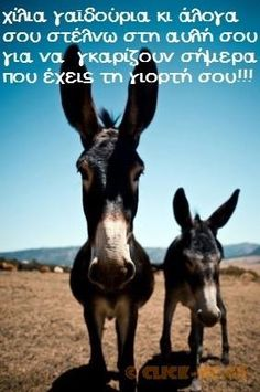 HD wallpapers to customize your iPhone Panorama, Color, iOS 7 and retina ready wallpapers and themes! Funny Donkey Pictures, Funny Animal Pictures, Funny Animals, Cute Animals, Animal Fun, Funny Greek Quotes, Funny Quotes, Funny Memes, Happy Name Day Wishes