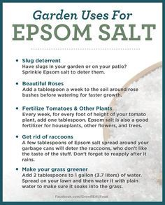 Potager Garden Epsom Salt Uses - You will be amazed to learn all the Epsom Salt Garden Uses and we are sure you will learn a thing or two. Our post has lots of charts and a video tutorial . Slugs In Garden, Garden Pests, Lawn And Garden, Abc Garden, Garden King, Garden Works, Potager Garden, Lush Garden, Garden Trellis