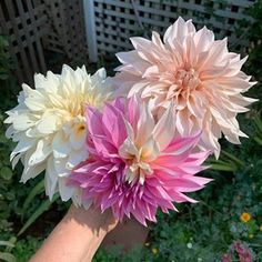 Sow your Seeds in Fall for a Beautiful Garden - Flower Patch Farmhouse Beautiful Flowers Garden, Beautiful Gardens, Container Plants, Container Gardening, Deadheading Flowers, Hollyhocks Flowers, Growing Dahlias, Sunflower Flower, Flower Patch