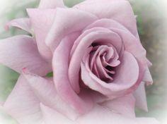 Touch of Lavender - Flowers Wallpaper ID 1112476 - Desktop Nexus Nature