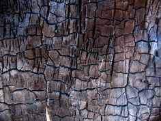 Charred Timber.