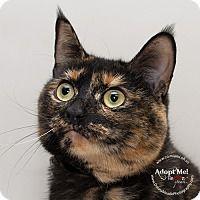 Adopt A Pet :: Jessie - Troy, OH