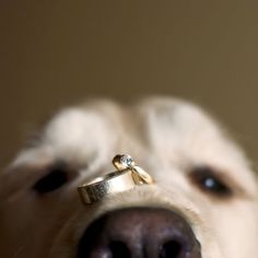 dog with wedding rings