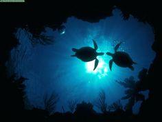 turtle, turtle, turtle....