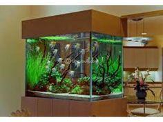 Aquarium Design Group - An Angelfish Live Planted Aquarium and Interior Planted Aquarium, Diy Aquarium, Aquarium Design, Saltwater Aquarium, Aquarium Fish Tank, Freshwater Aquarium, Aquarium Ideas, Nature Aquarium, Wall Aquarium