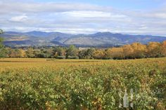 Discover the culinary delights and world-renowned wineries of The Napa Valley during the Appellation Trail event.