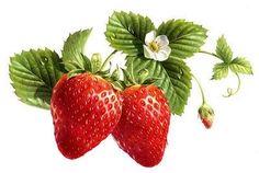 Botanical Drawings, Botanical Illustration, Botanical Prints, Illustration Art, Watercolor Fruit, Fruit Painting, China Painting, Strawberry Tattoo, Strawberry Art
