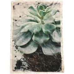 Mo-Ca Voorjaar Poster - vetplant - Print & Posters Print Poster, Succulents, Canvas, Green, Plants, Painting, Instagram, Posters, Everything