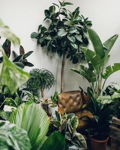 plants - green - vegetal - From when we first visited View and visit all that has to do with conservatories Plants Are Friends, Interior Plants, Botanical Interior, Interior Design, Plant Decor, Houseplants, Indoor Plants, Potted Plants, Gardening Tips